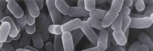 Revisión Cochrane 2013: Probióticos para la prevención de la diarrea asociada al Clostridium difficile en adultos y niños