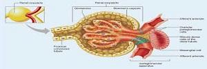 Factores asociados a la disminución del filtrado glomerular en pacientes con diabetes mellitus tipo 2, Aten fam- 2017